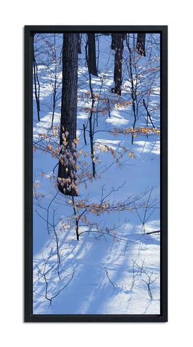 Winter Beech Tree