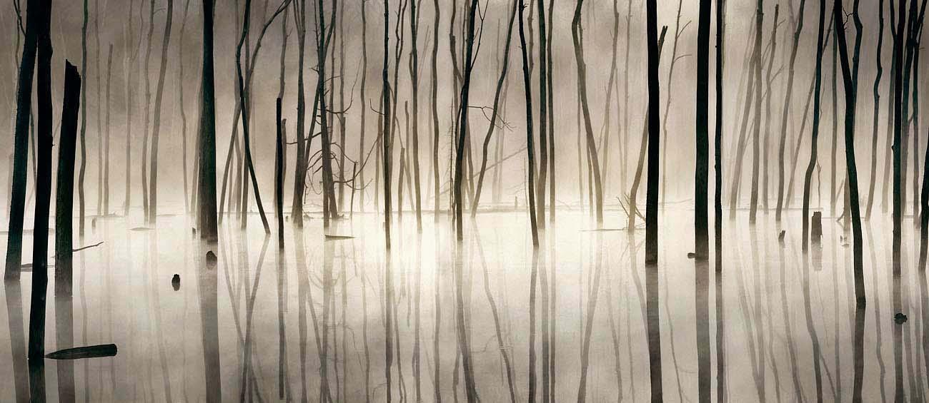 Misty Beaver Pond