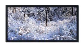 Edge of Winter Woods.jpg