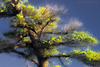 White Pine Blooming - fragment.jpg