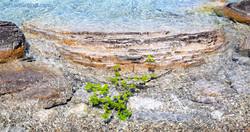 Spring Reef
