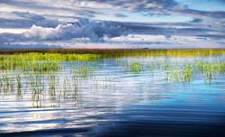 Grassy Shallows of Lake Superior