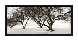 Winter Apple Trees