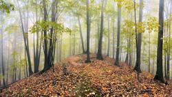 Carolinian Woods in Dundas Valley