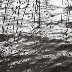 Water Grass Study #3