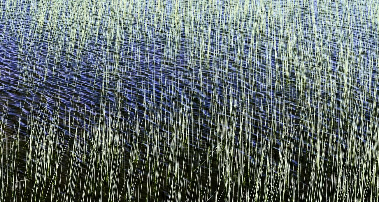 Grassy Reef