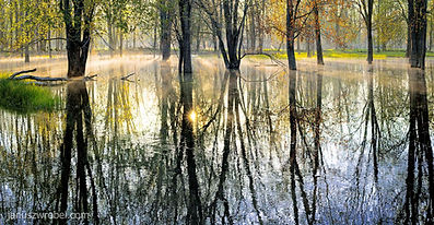 Spring sunrise in a flooded forest at Notawasega River in Ontario