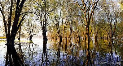 Spring at Ontario's Everglades #2.jpg