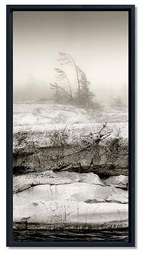 Misty Shoreline.jpg