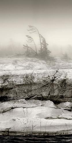 Misty Shoreline