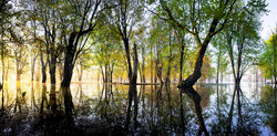 Spring at Ontario's Everglades