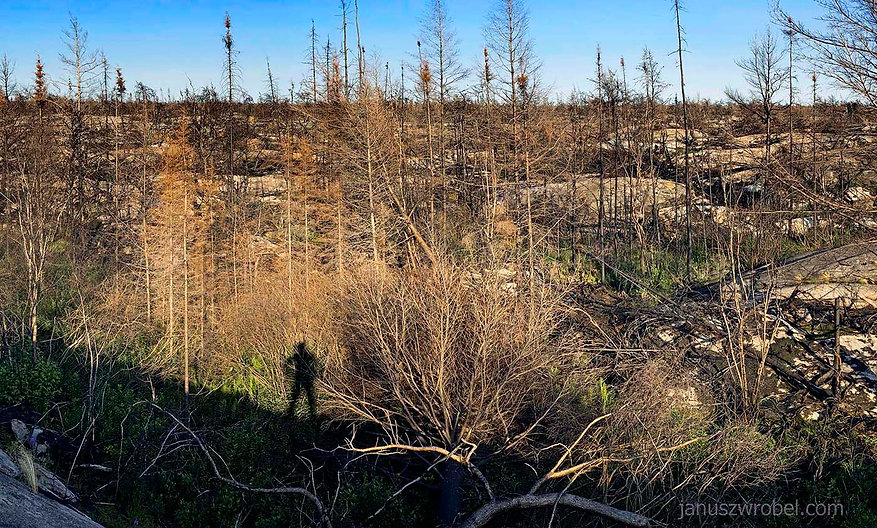 The French River environment of Canadian Shield after a fire.