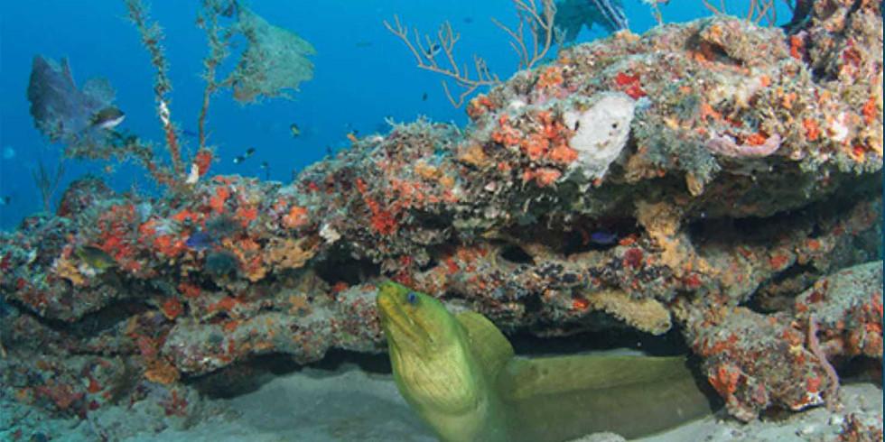 West Palm Beach Boat Dive