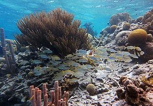 BonaireSnorkeling1.jpg