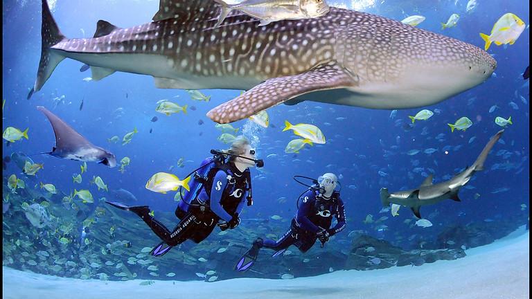 Georgia Aquarium Dive Adventure!