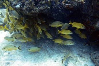 Plenty of colorful fish on the reef at Islamorada. Photo - Don L.