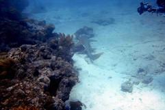 On the reef at Islamorada. Photo Don L.