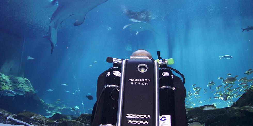 Georgia Aquarium - Discover Rebreather Adventure