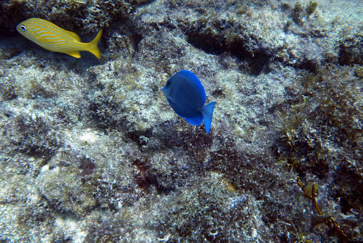 Bright colors on the Islamorad Reef!