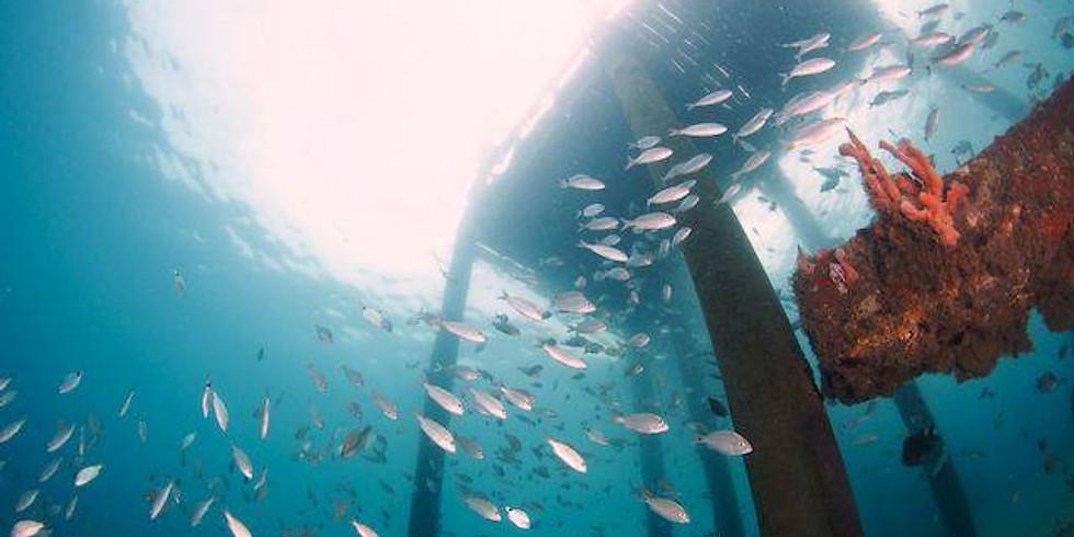 Blue Heron Bridge Day Dive