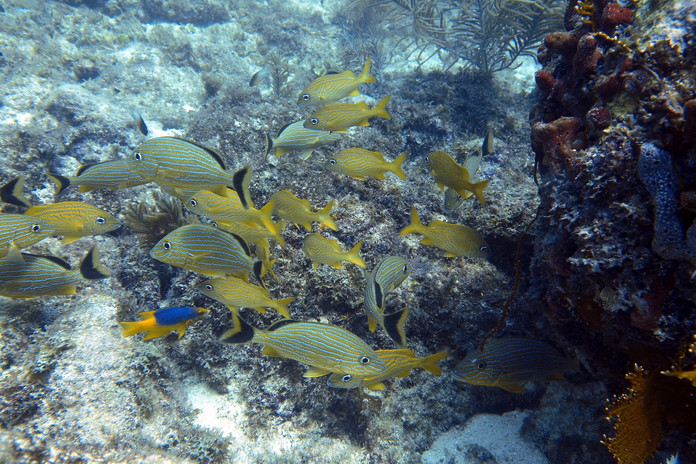 Colorful Fish On The Reef