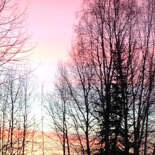 Pink Sky with Trees