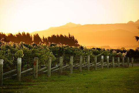 NZ Sunrise.jpg