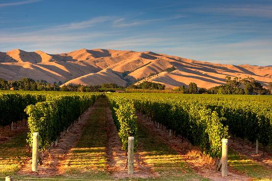 NZ Vineyards.jpg