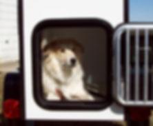 Kompact Kamp, wags, motorcycle trailer, cargo trailer, motorcycle camper, motorcycle camper trailer, motorcycle cargo trailer, mini motorcycle trailer, small camper trailer, Mini Mate, Compact Camp, wags trailer, pet trailer, dog trailer, dog