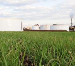 [Cepea] Indicador do etanol hidratado volta a subir nas usinas de São Paulo