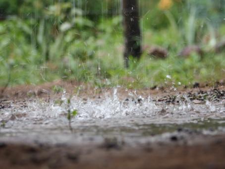 Chuvas trazem alívio para plantações secas de café e cana no Brasil