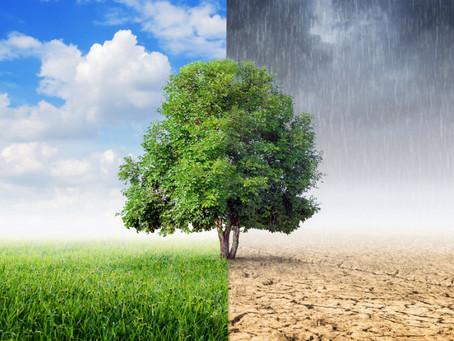 Comissão de mudanças climáticas discute RENOVABIO e RENOVACALC