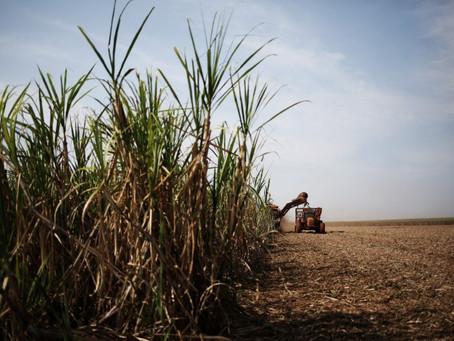 Chuva retarda colheita de cana e entressafra no CS pode ser mais curta, diz FCStone