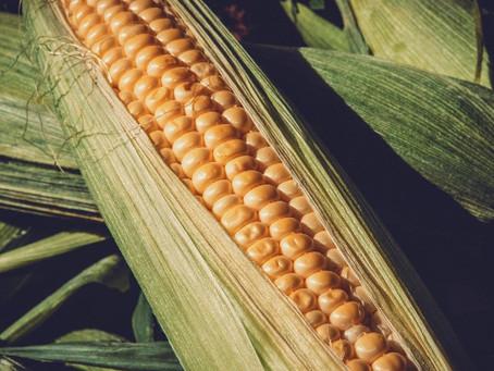 Cadeia de etanol de milho cresce expressivamente no Brasil