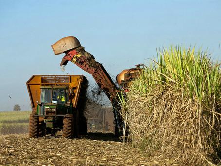 A Demanda Chinesa Aquece a Indústria Brasileira de Etanol