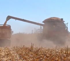 Brasil deve produzir 2,5 bilhões de litros de etanol de milho em 2020/21