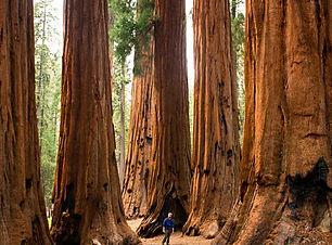 SequoiaNP