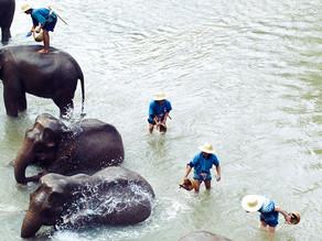 Thailand to go: Elephants