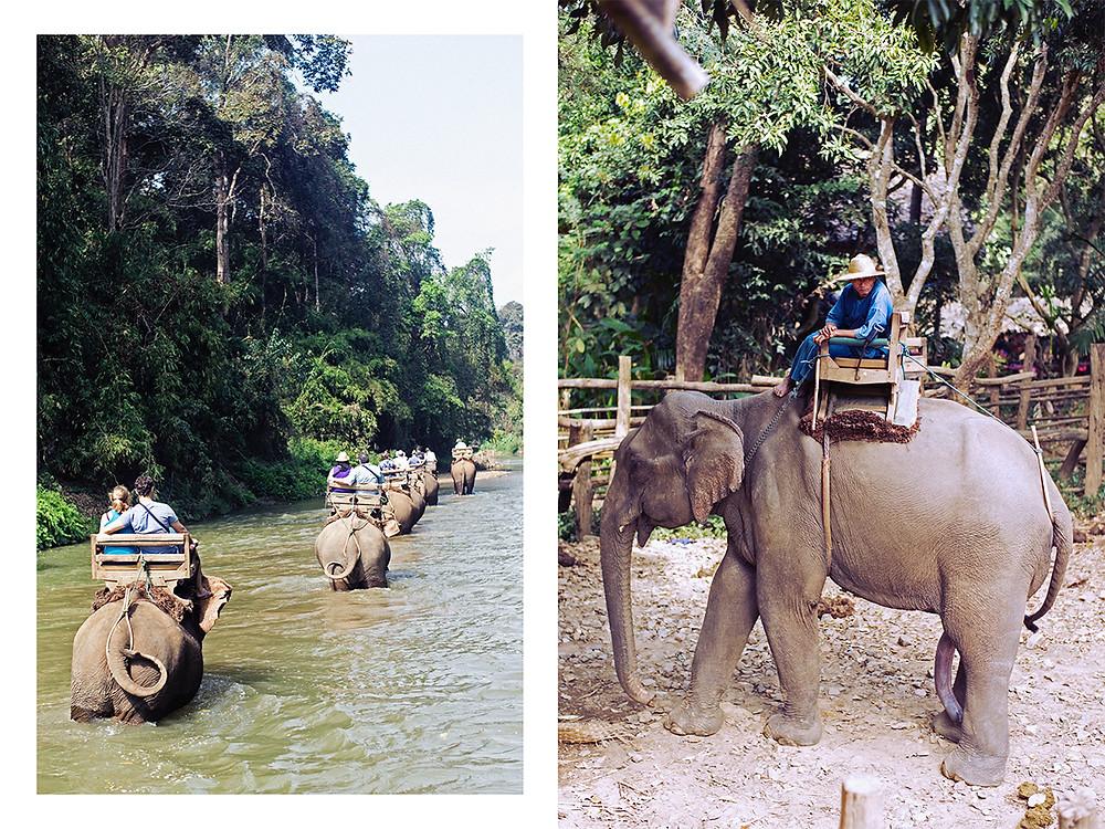 Collage Thai Elephants