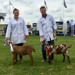 Notts Country Show