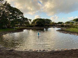 Fountain Ponds.jpg
