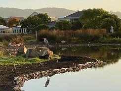Grey Heron Ponds.jpg