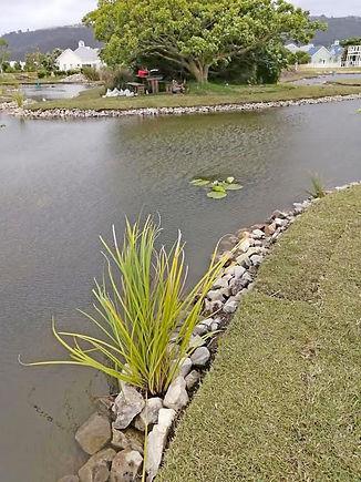 reeds enhanced.jpg