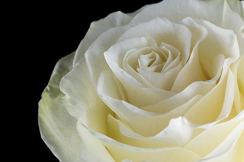 Bianco amore -Stampa su carta fotografica