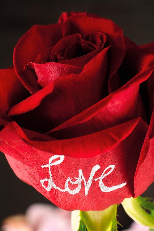 Messaggio d'amore - stampa fotografica 20x30