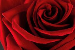 Rossa passione