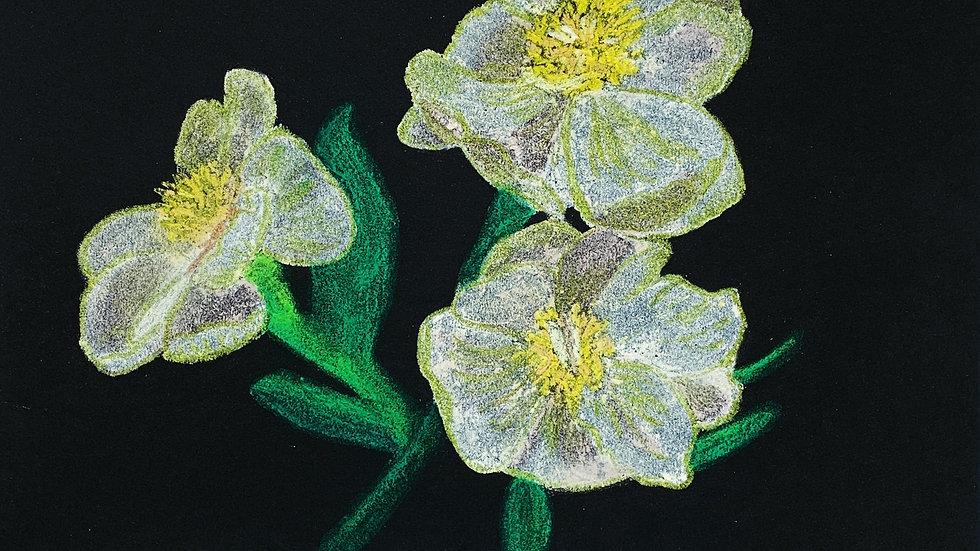 Floral Arrangements #15