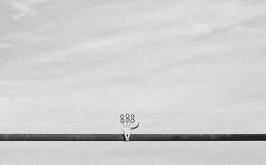 03A1291C-9B7C-4D01-B89A-A265AD1E4F0C.jpg