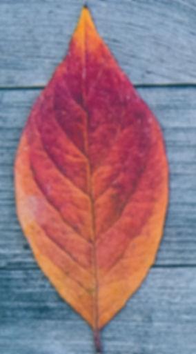 one leaf red.jpeg
