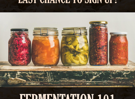 The Fermentation Workshop